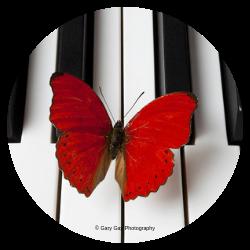 Keys if You Please Piano Studio Logo